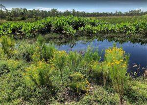 Babcock-Webb Wildlife Reserve, Punta Gorda FL